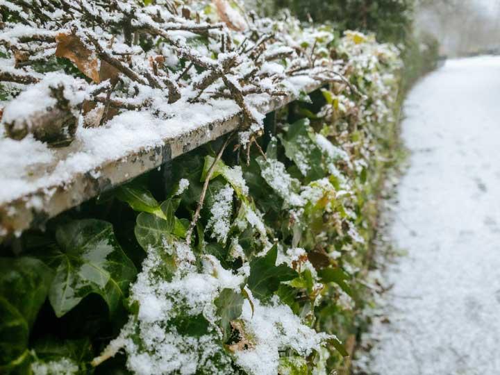 Tips för att underhålla din trädgård på vintern